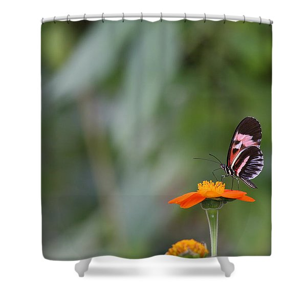 Butterfly 16 Shower Curtain