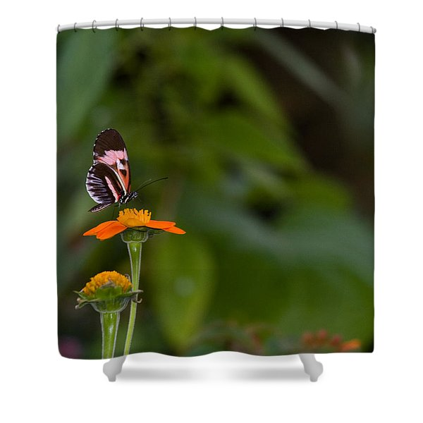 Butterfly 26 Shower Curtain