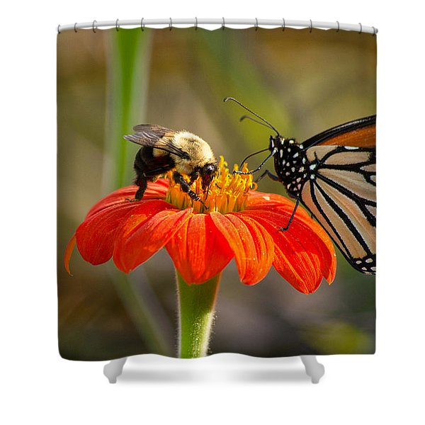 Butterfly And Bumble Bee Shower Curtain