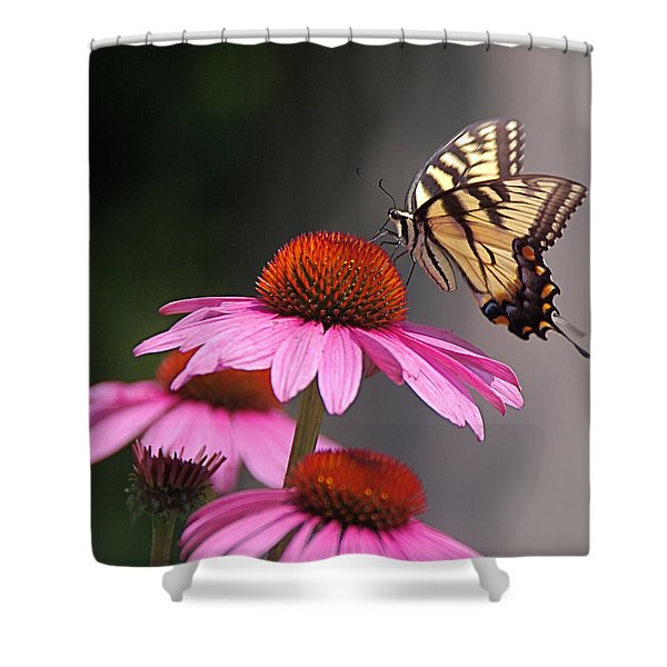 Butterfly And Coneflower Shower Curtain