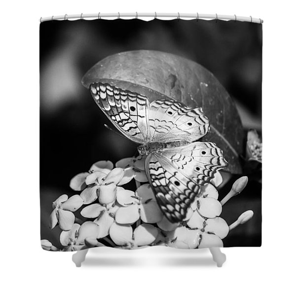 Butterfly Bw - Ins18 Shower Curtain