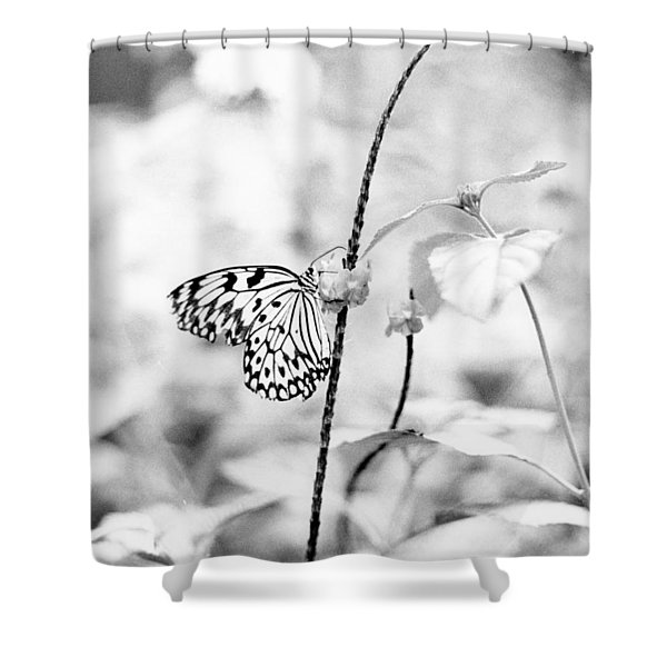 Butterfly Eatting  Shower Curtain