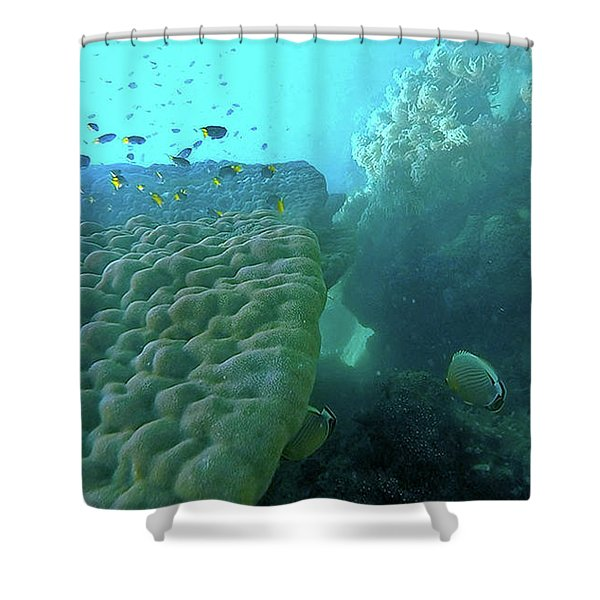 Shower Curtain featuring the photograph Butterfly Fish  by Debbie Cundy