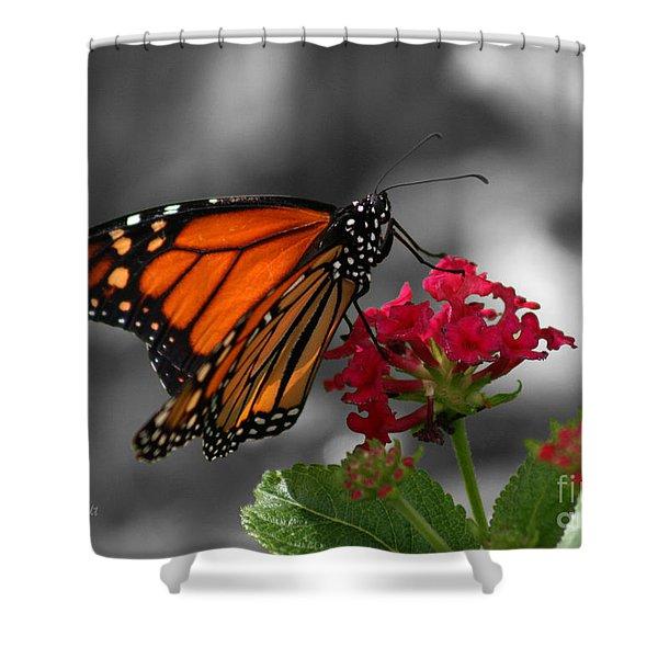 Butterfly Garden 01 - Monarch Shower Curtain
