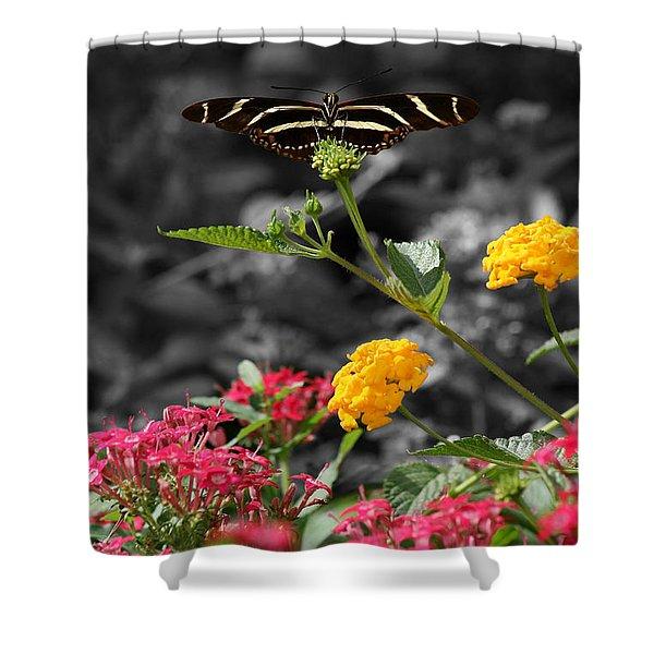 Butterfly Garden 05 - Zebra Heliconian Shower Curtain