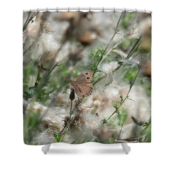 Butterfly In Puffy Seed Heads Shower Curtain