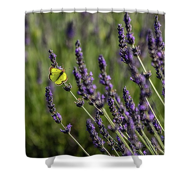 Butterfly N Lavender Shower Curtain