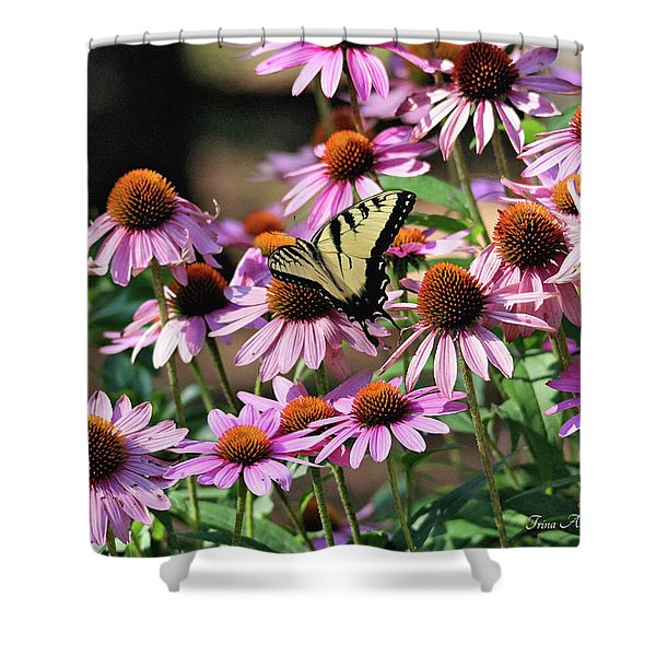 Butterfly On Coneflowers Shower Curtain
