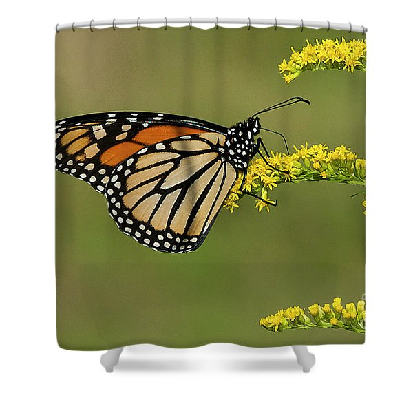 Butterfly On Flowers Shower Curtain