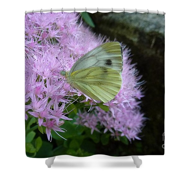 Butterfly On Mauve Flowers Shower Curtain