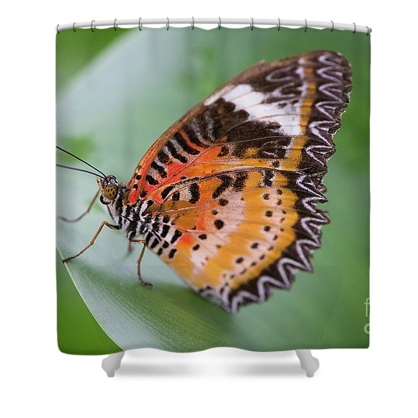 Butterfly On The Edge Of Leaf Shower Curtain