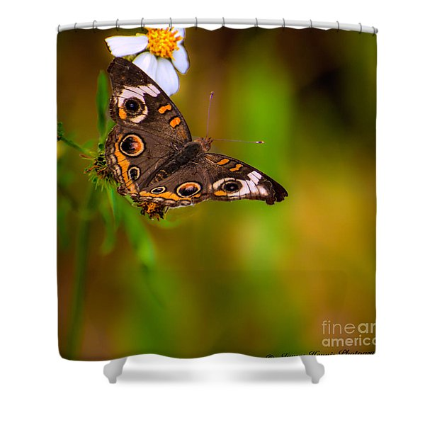 Butterfly One Shower Curtain
