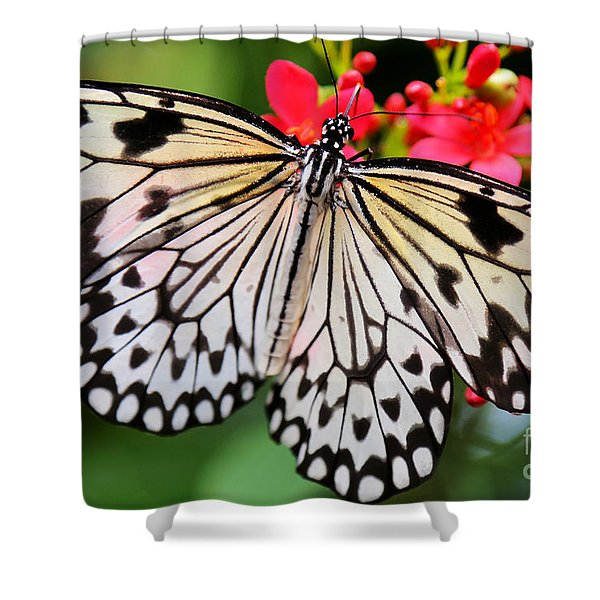 Butterfly Spectacular Shower Curtain