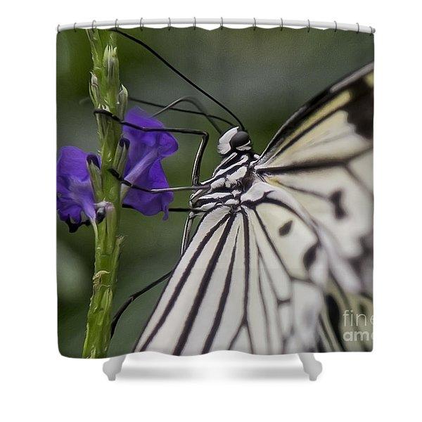 Butterfly Splendor Shower Curtain