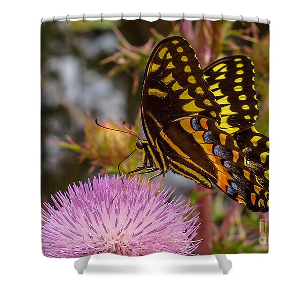 Shower Curtain featuring the photograph Butterfly Visit by Tom Claud