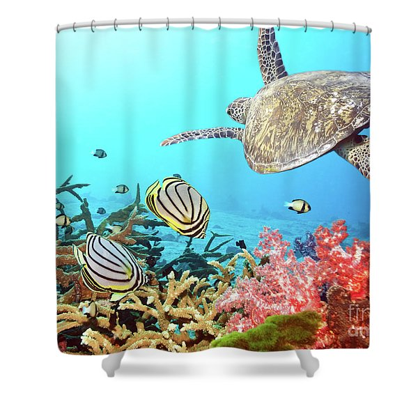 Butterflyfishes And Turtle Shower Curtain