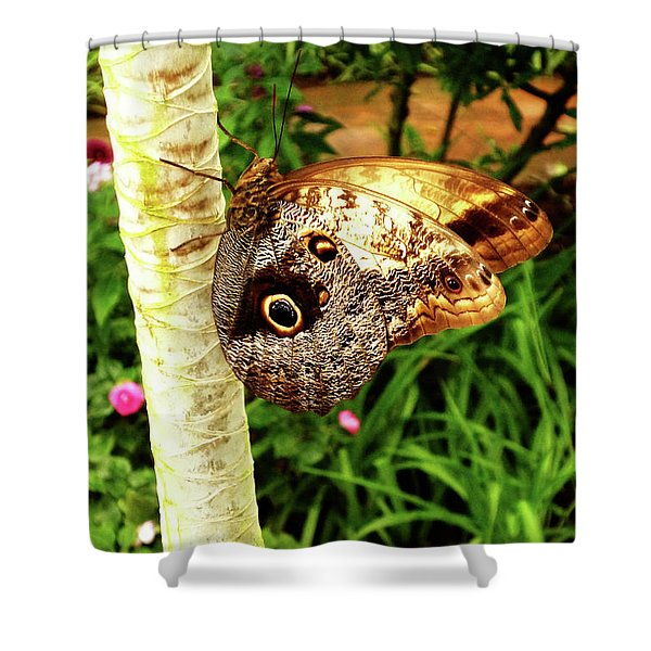 Butterfly's Eyes Shower Curtain