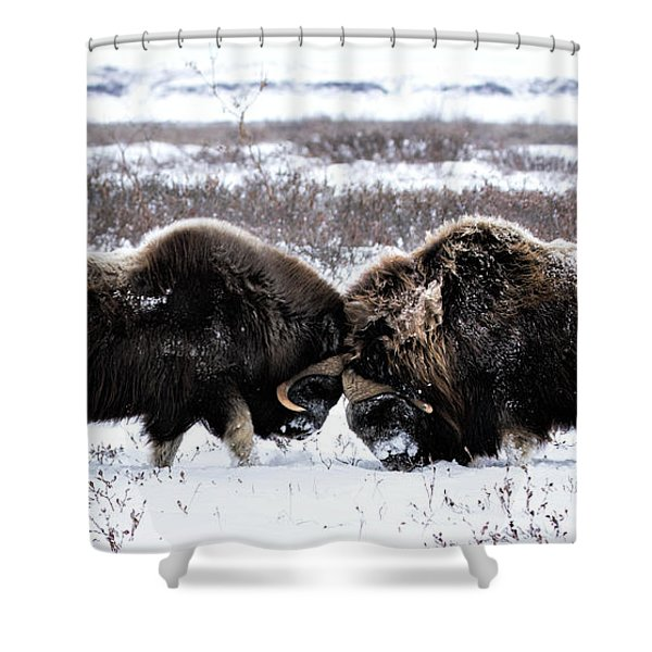 Butting Heads Shower Curtain