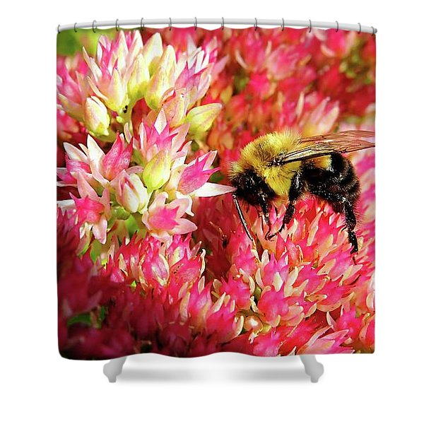 Buzy Bee Shower Curtain