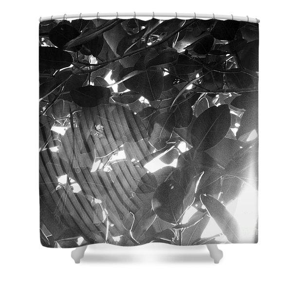 Bw Shadow Threads Shower Curtain