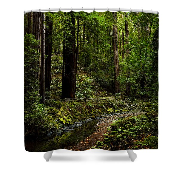 By The Stream In Muir Woods Shower Curtain
