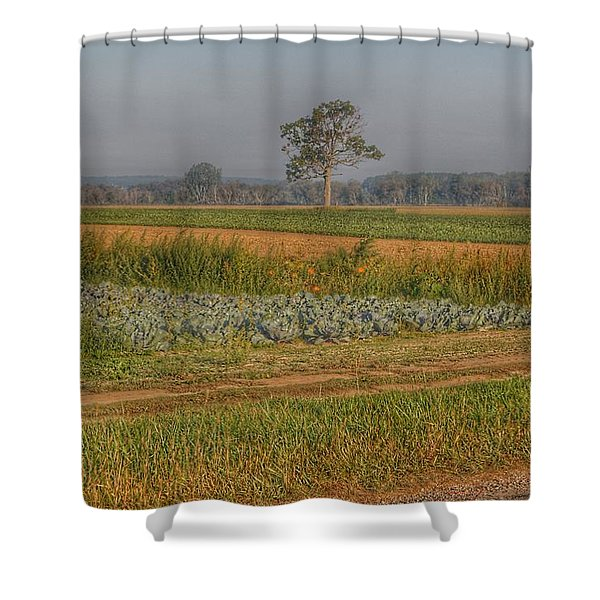 2009 - Cabbage And Pumpkin Patch Shower Curtain
