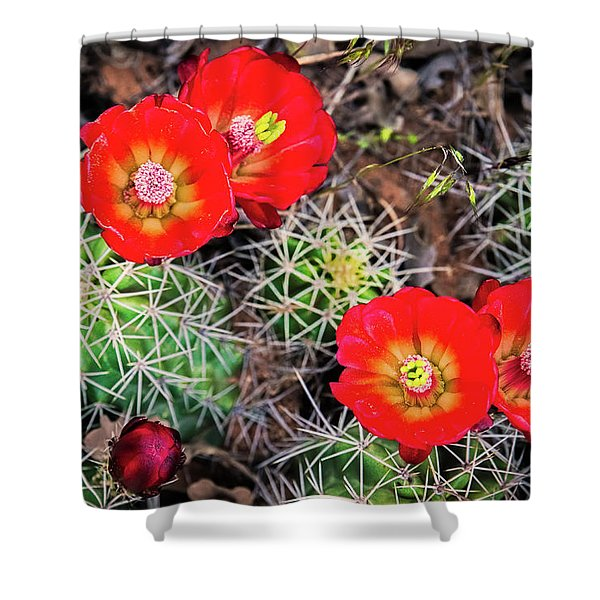 Cactus Bloom Shower Curtain