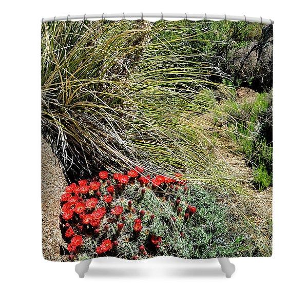 Crimson Barrel Cactus Shower Curtain