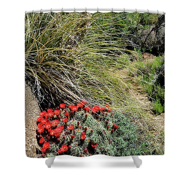 Crimson Barrel Cactus Shower Curtain