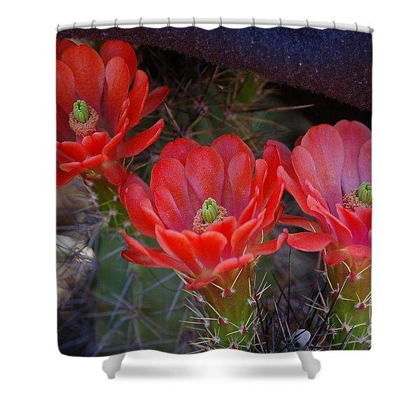 Cactus Flowers Shower Curtain