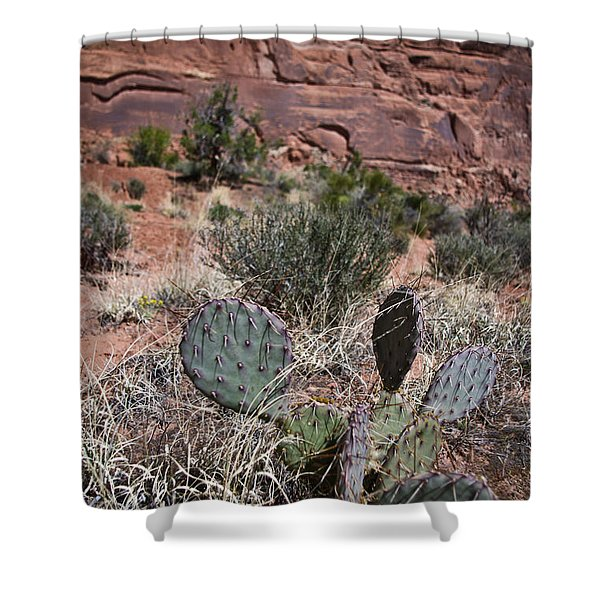 Cactus In Arches Nat'l Park Shower Curtain