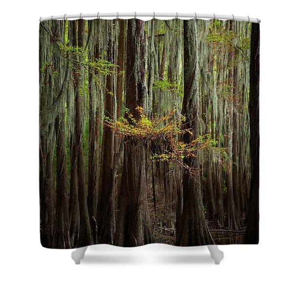 Caddo Lake #5 Shower Curtain