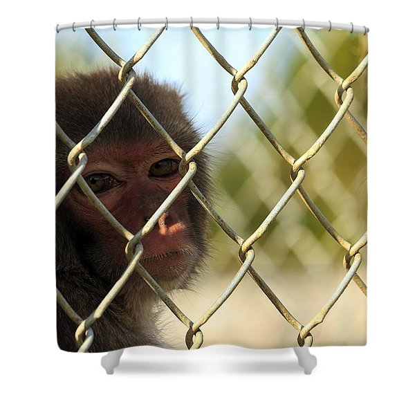 Caged Monkey Shower Curtain