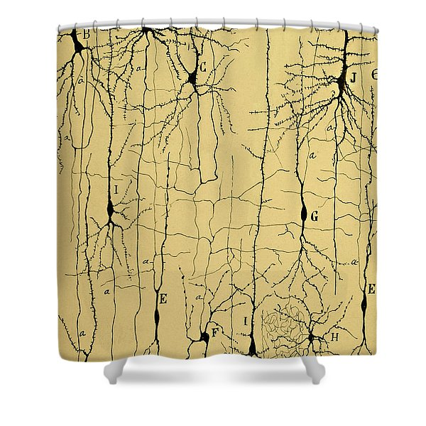 Cajal Drawing Of Microscopic Structure Of The Brain 1904 Shower Curtain