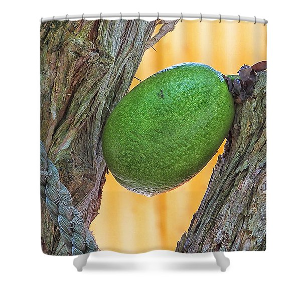 Calabash Fruit Shower Curtain