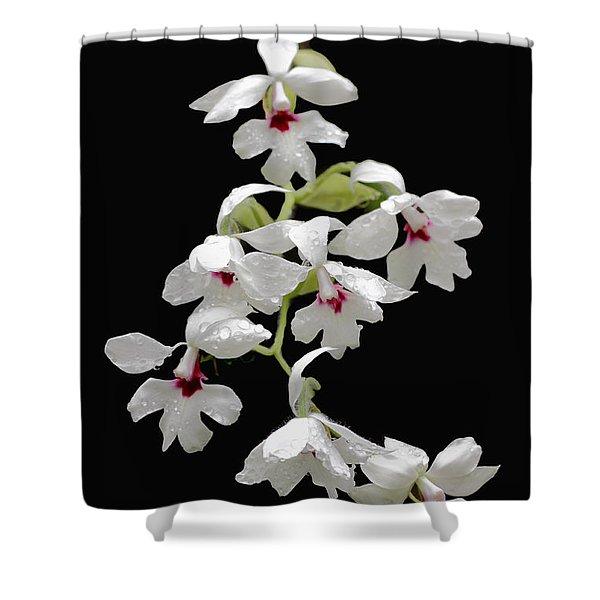 Calanthe Vestita Orchid Shower Curtain