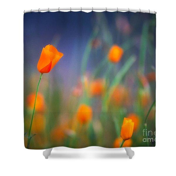 California Poppies 2 Shower Curtain