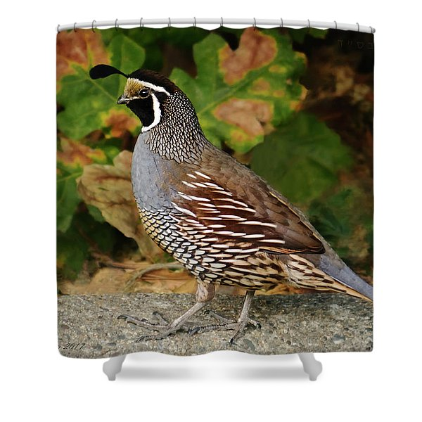 California Quail Rooster Shower Curtain
