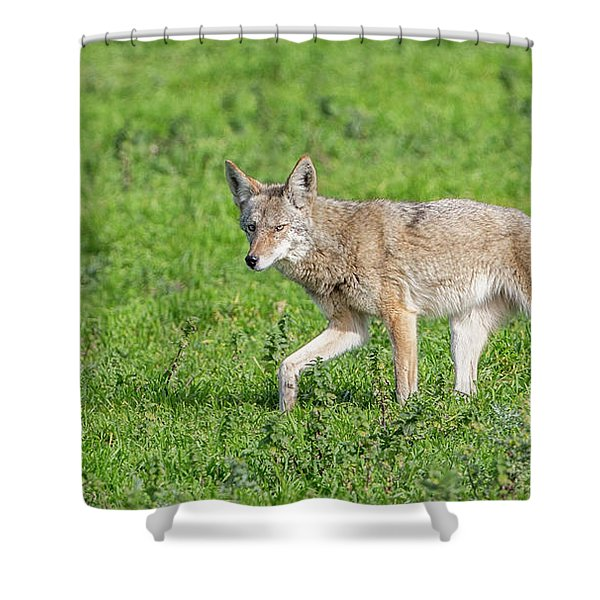 California Walk  Shower Curtain