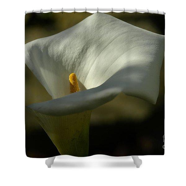 Callasf Shower Curtain