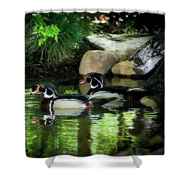 Calm Waters - Wood Ducks Shower Curtain