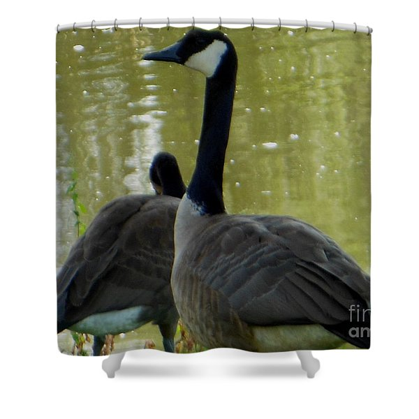 Canada Goose Edge Of Pond Shower Curtain