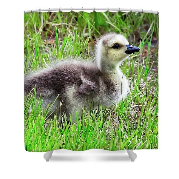 Canada Goose Gosling Shower Curtain