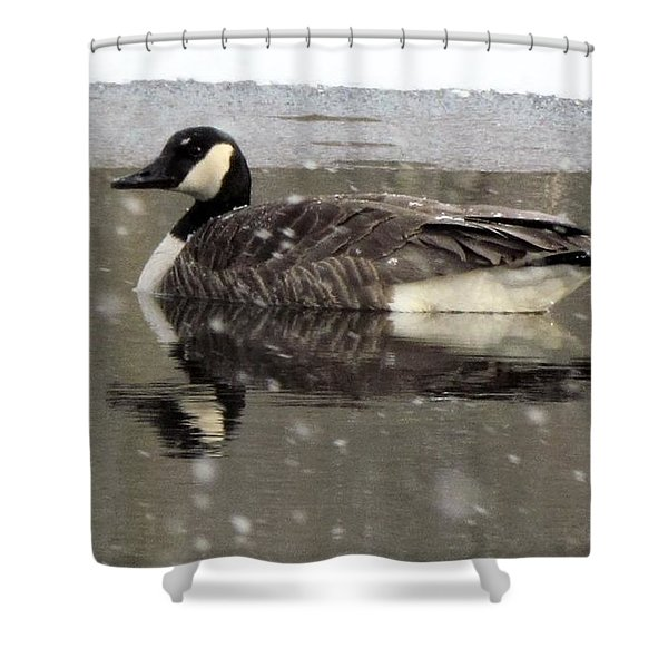 Canadian Goose In Michigan Shower Curtain