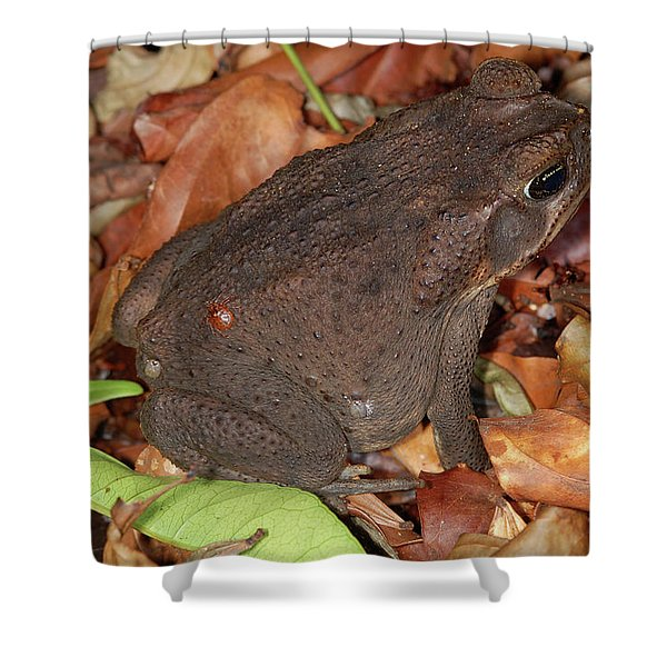 Cane Toad Shower Curtain