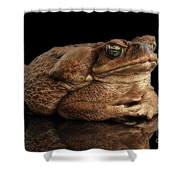 Shower Curtain featuring the photograph  Cane Toad - Bufo Marinus, Giant Neotropical Or Marine Toad Isolated On Black Background by Sergey Taran