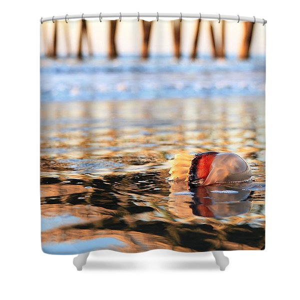 Cannonball Jellyfish Beached Shower Curtain