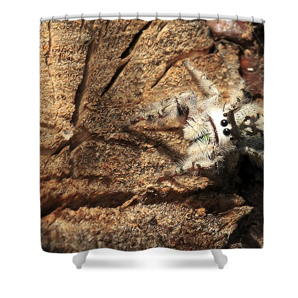 Canopy Jumping Spider Shower Curtain