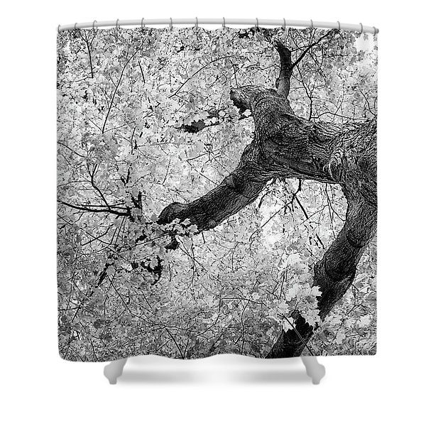 Canopy Of Autumn Leaves In Black And White Shower Curtain