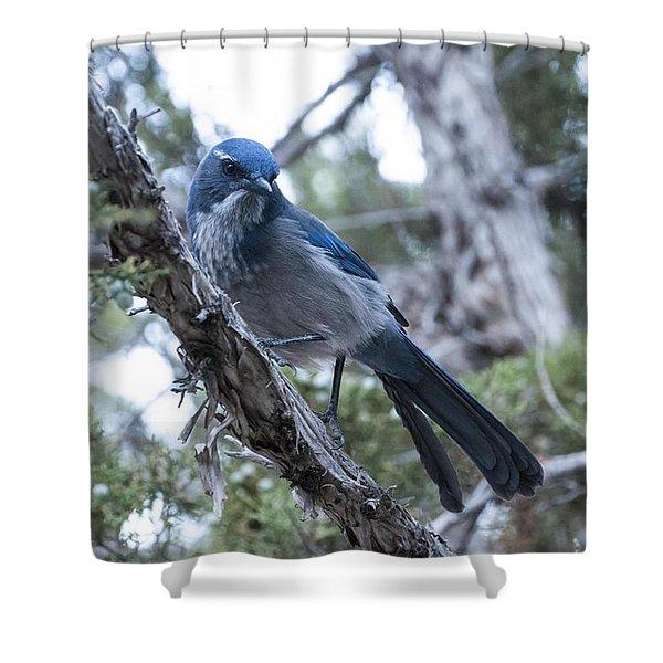 Canyon Jay Shower Curtain